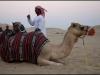 Abu Dhabi desert0255