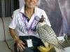 And nursing a falcon