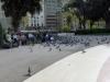 Feeding the pigeons in Plaça de Catalunya