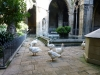 The famous geese that live in the cloister of the cathedral