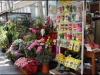 Flower stall on La Rambla