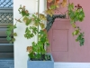 A potted grape vine – not too much wine there…