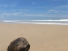 A coconut sat alone on the beach. There are no coconut palms on Peregian Beach. This lonely coconut looked like it had had a long sea journey.