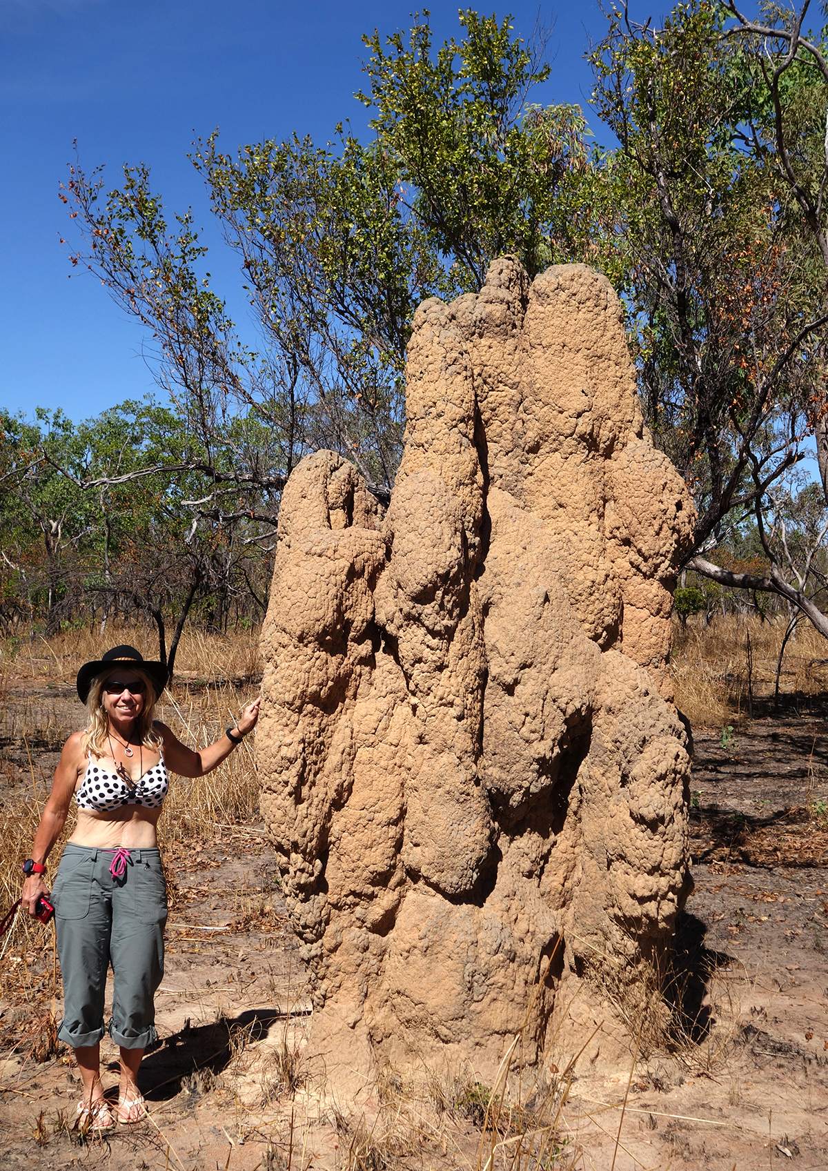 One of the larger termites nest we saw coming into Kakadu